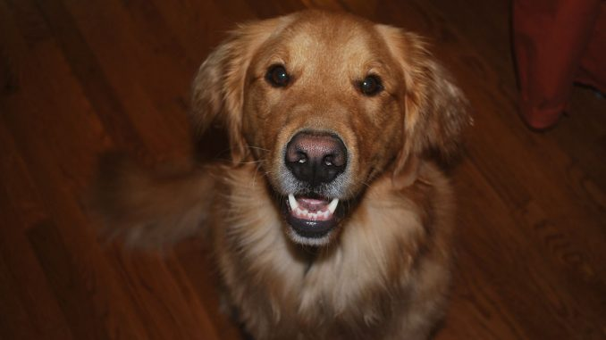 Tips for keeping dogs teeth healthy