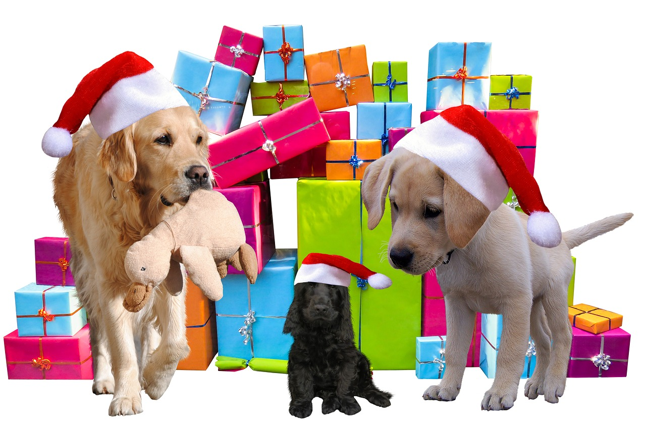 Best Christmas Gift for Dog Lovers