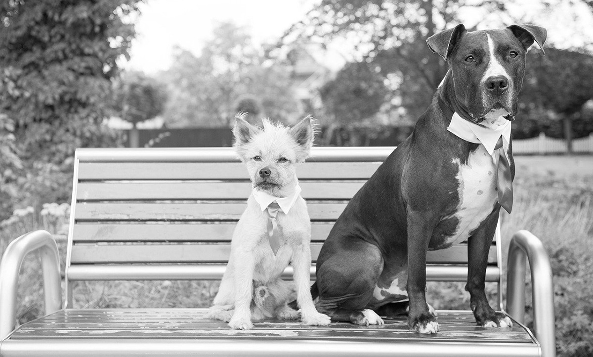 Dressed up dogs sitting on bench